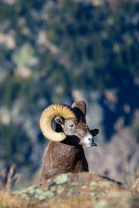 Rocky Mountain National Park Photo Portfolio