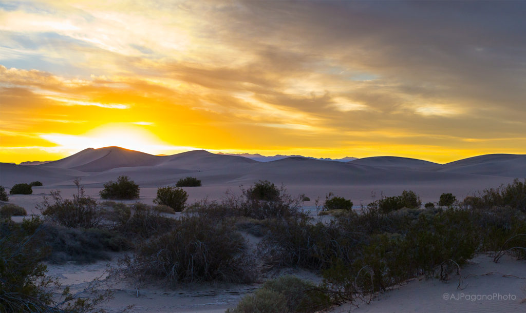 Mesquite Dune Sunrise