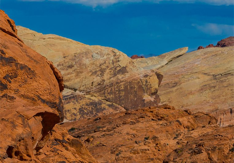 The Fiery Cliff Sheep of Valley of Fire
